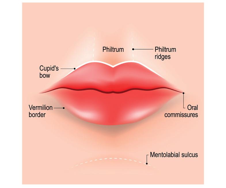 Áreas  de los labios